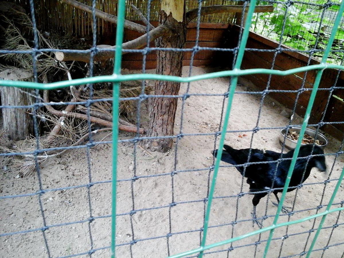Ośrodek Rehabilitacji Ptaków Dzikich w Bukwałdzie | Kopuła Geodezyjna